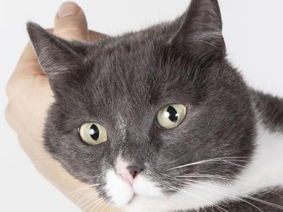 Kat met paraveterinair