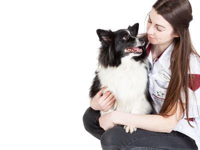 Hond collie met paraveterinair