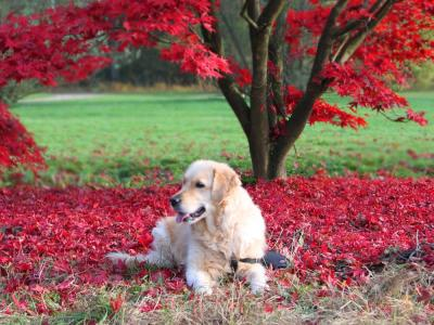 Labrador herfst