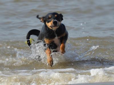 Hond in de zee
