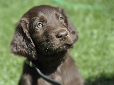 Puppy bruin buiten