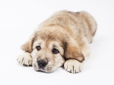 hond op de grond