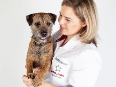 Hond in armen dierenarts botbreuk