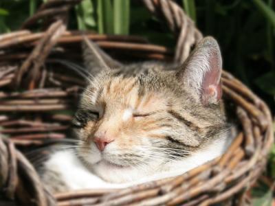 Kat slapend in mand