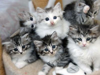 Kittens in mand