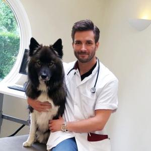 Dierenarts Martijn Houbrechts met hond