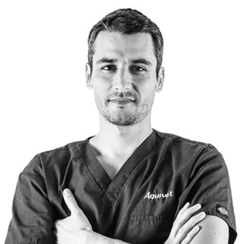 Dr. Vet. Jean-Guillaume Grand