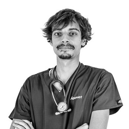 Dr. Vet. Martin Monier