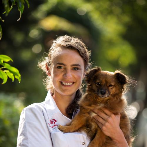 dierenarts met hond
