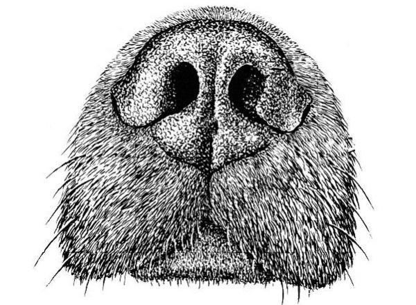 Ademhalingsproblemen Kortsnuitige Hond Anicura Nederland