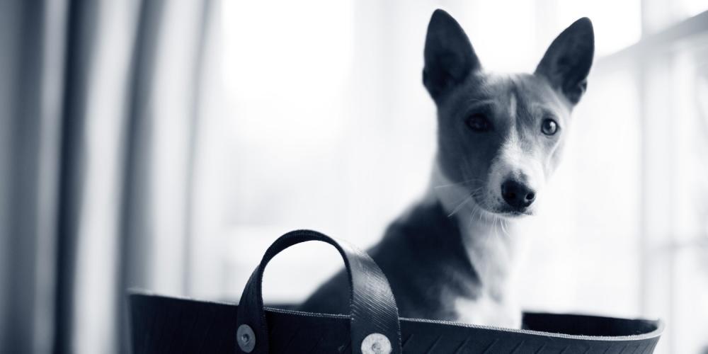 hond in tas