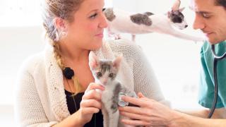 Katter hos veterinär