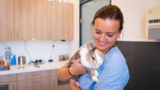 Dierenarts konijn