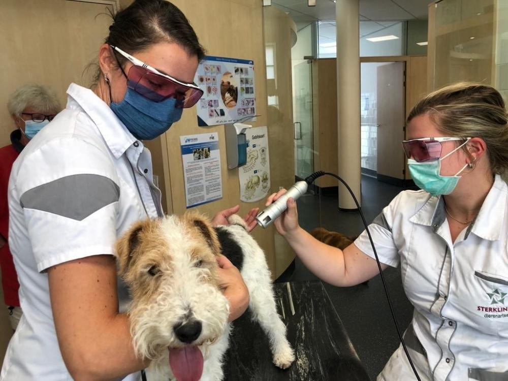 Lasertherapie bij hond