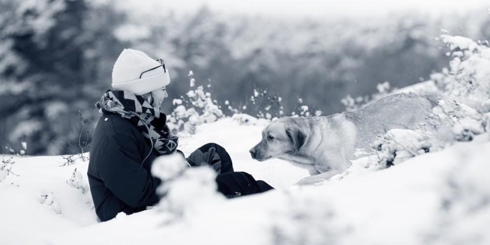 hond vrouw in sneeuw