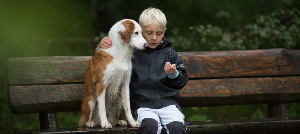 dog boy bench