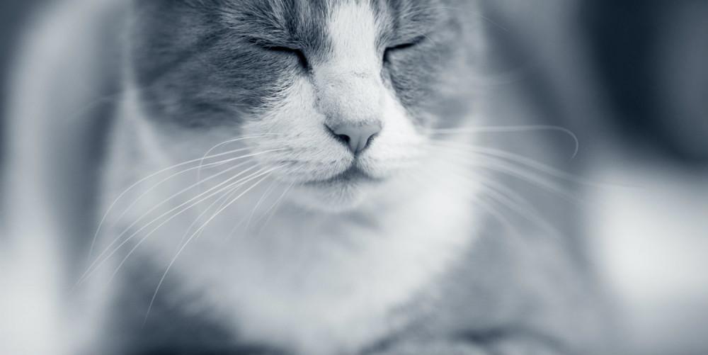 Akupunktur Katze