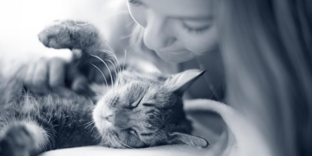 Kuscheln von Mensch und Katze