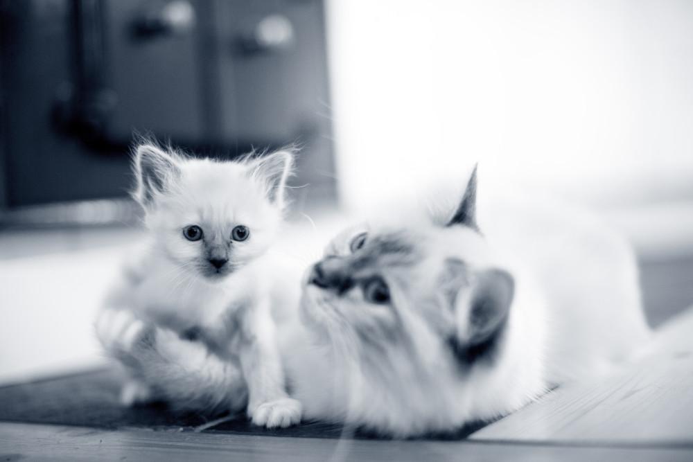 Die Lebensabschnitte einer Katze