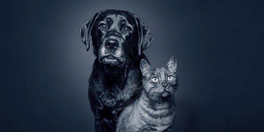 Ältere Hunde und Katzen