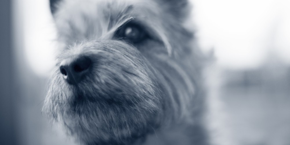 Hundens fantastiske snude