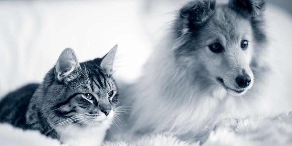 Hund og kat priser Hjørring