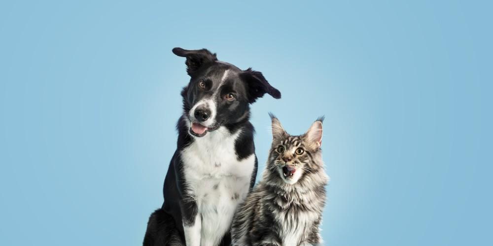 Husk at tage dit kæledyr til dyretandlægen