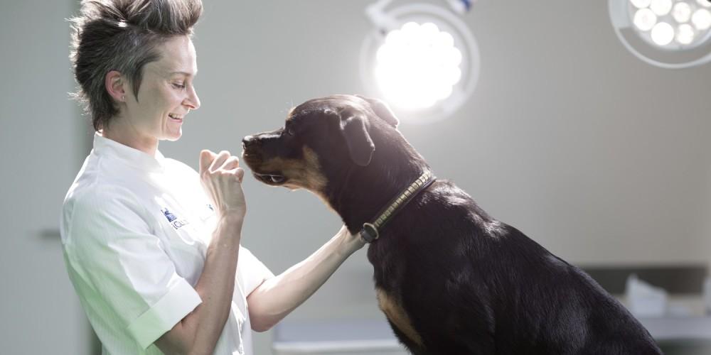 Træn din hund i at gå til dyrlægen