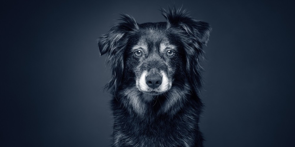 Giv din gamle hund et godt liv