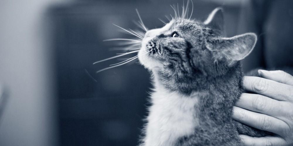 Aflivning og kremering af katte