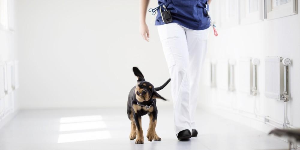 Medicinsk udredning af hund
