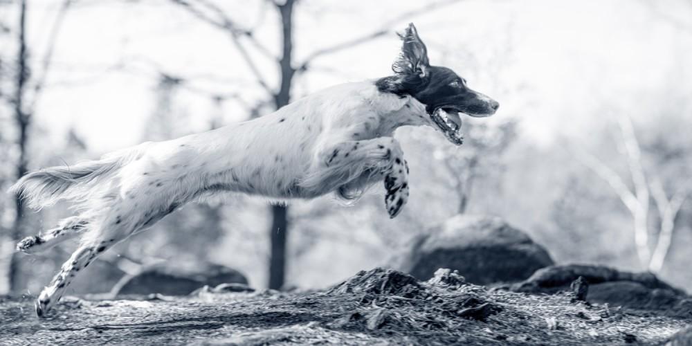 Stabilitetstræning til hund