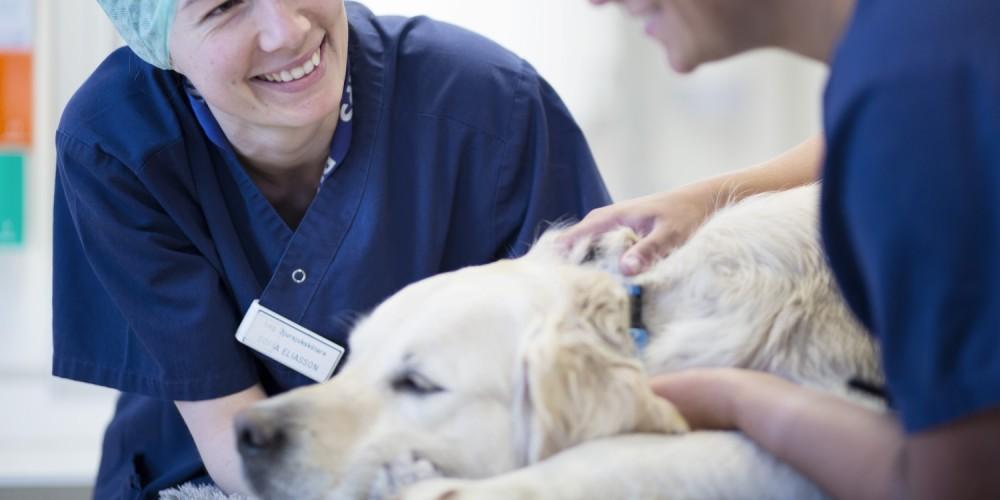 Servicis AniCura Lepanto Referencia Veterinaria