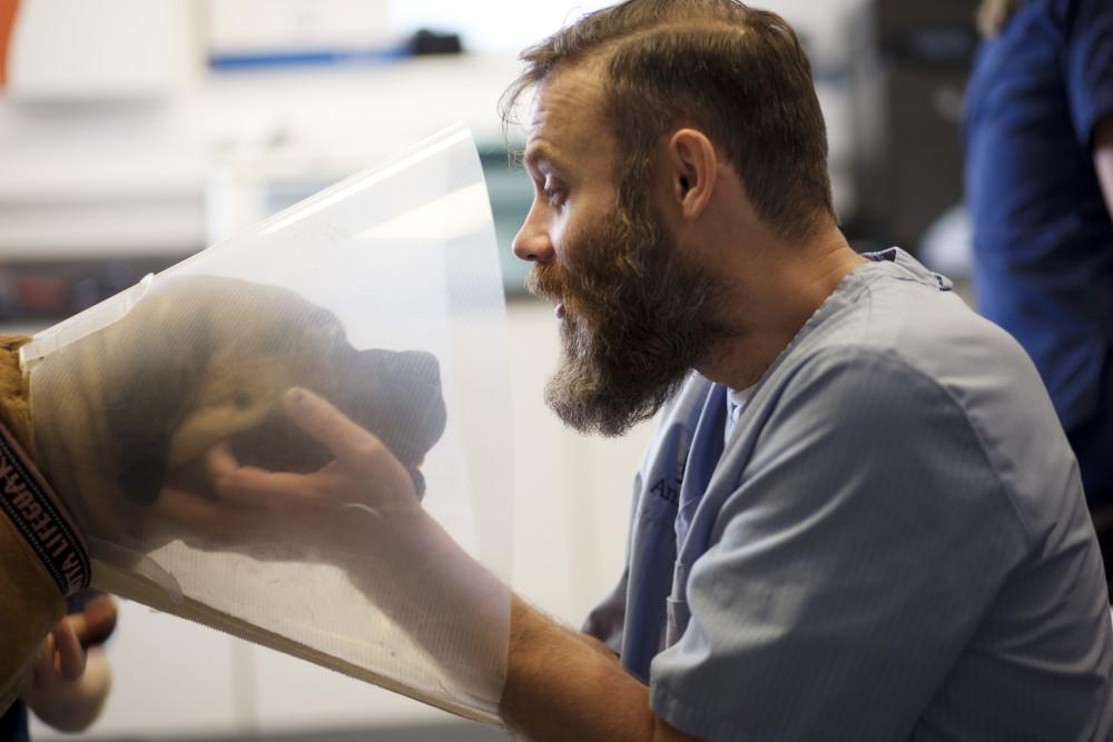 Las consecuencias de un Otohematoma en perros