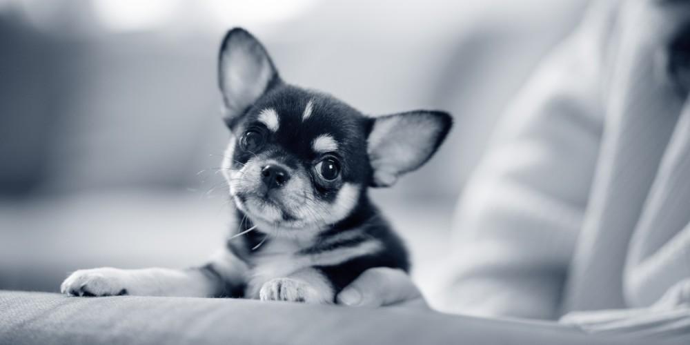 Descarga nasal en los perros