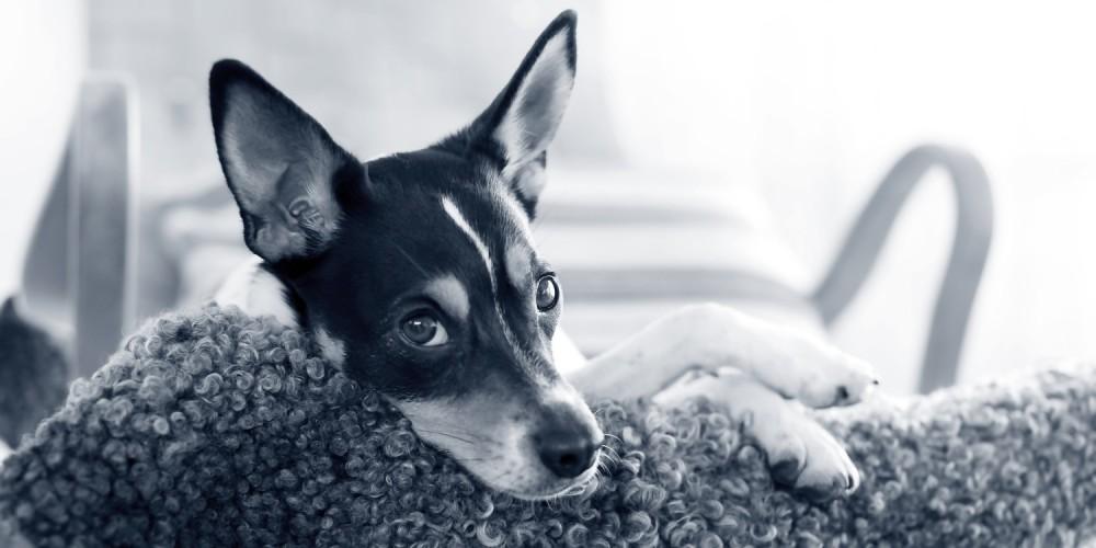 parásitos intestinales perro