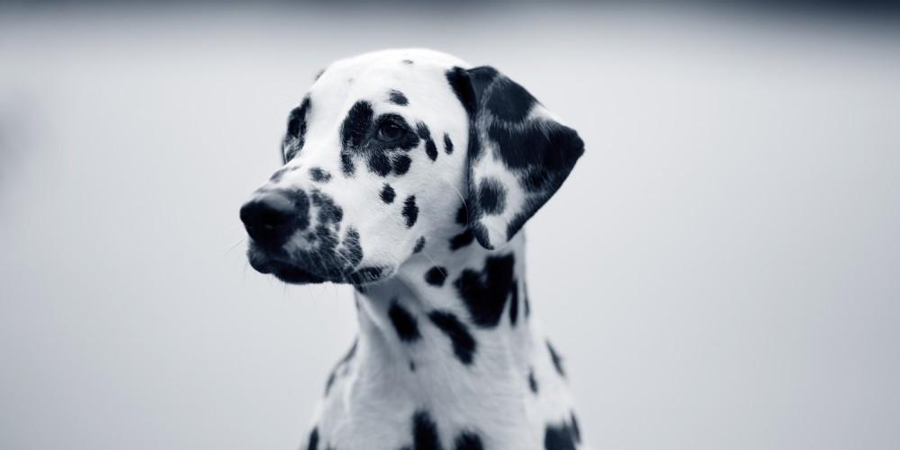 Glaucoma en los perros