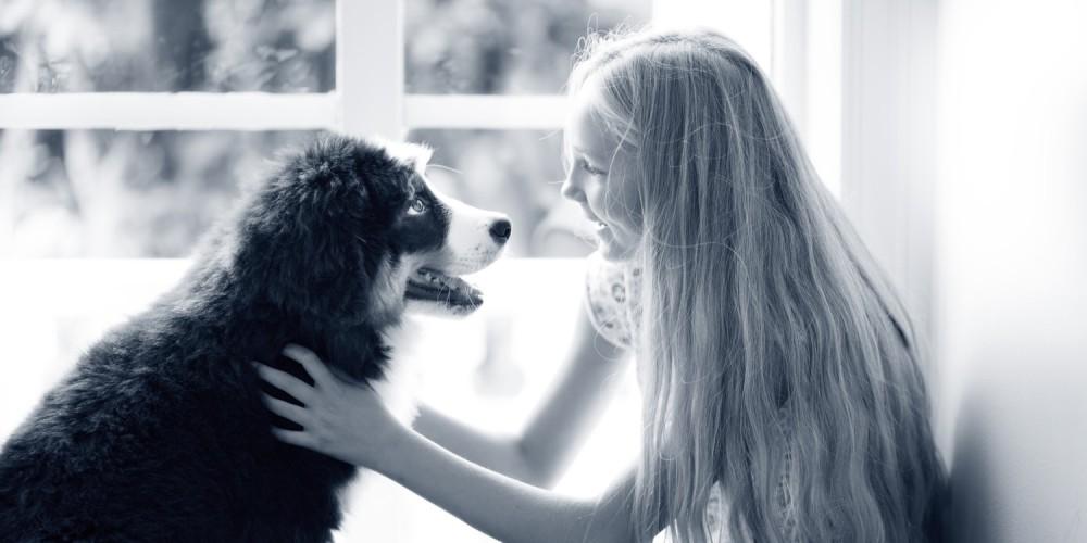 memoria perros