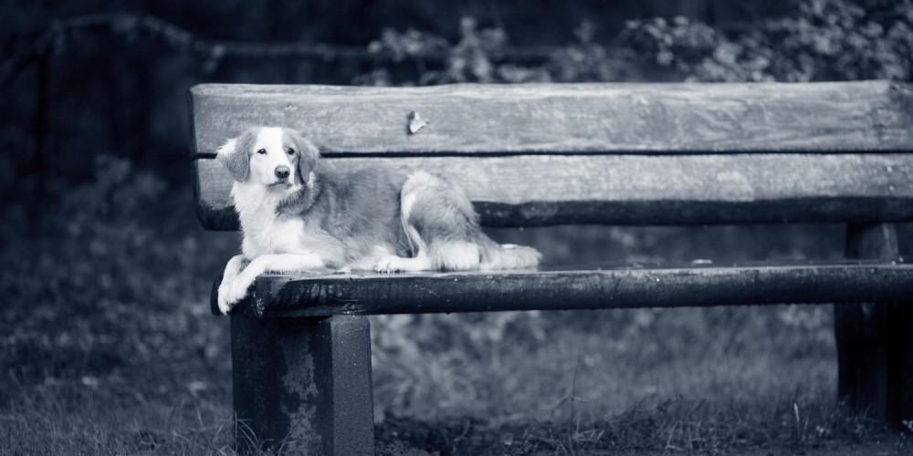 Vómitos agudos en los perros