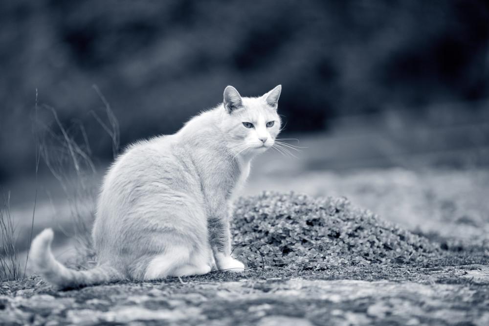 fases de la vida de un gato