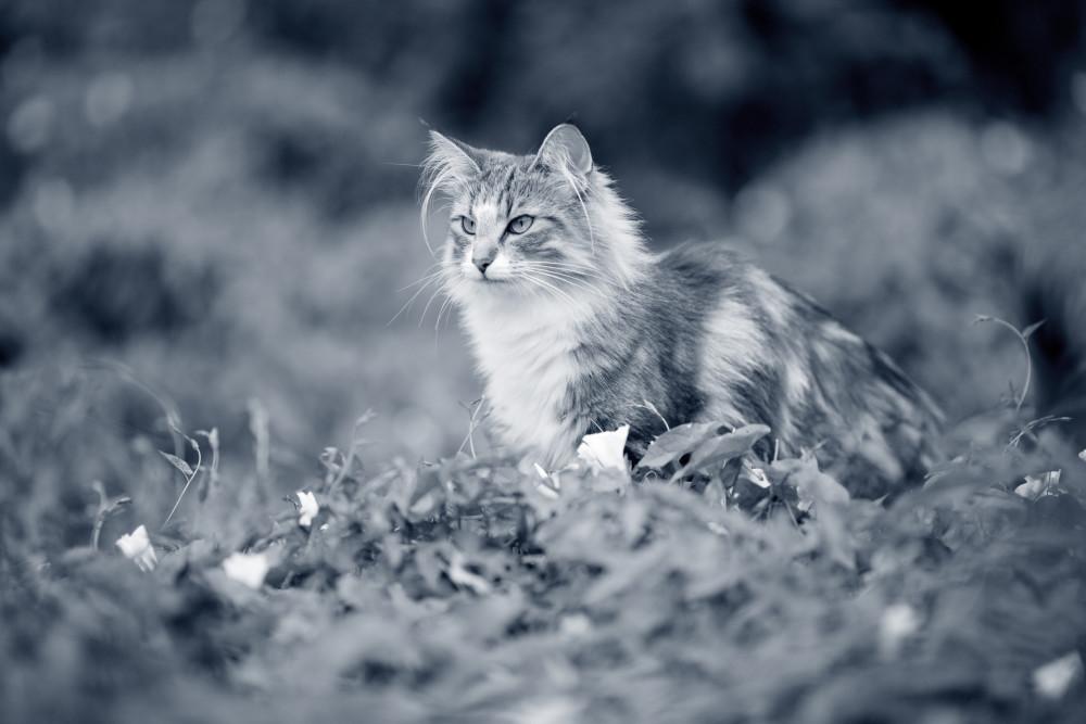 gatosyserpientes