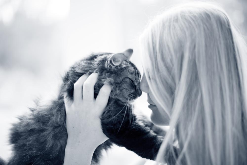 hernia en gatos