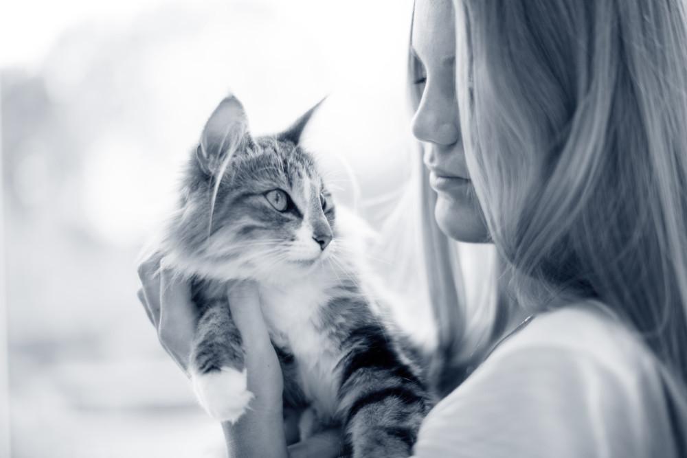tu gato orina donde no debe