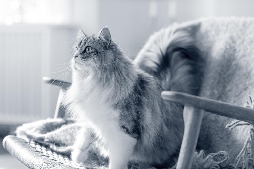 gatodiabetes