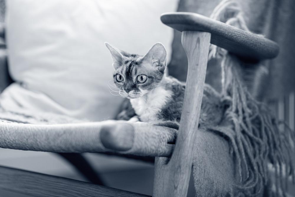 gato paracaidista