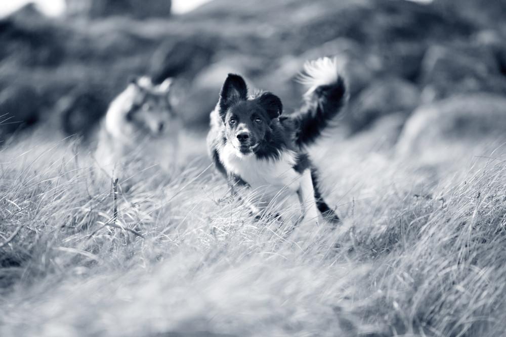 correrconperros