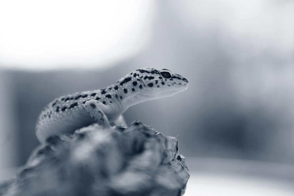 nutrición reptiles