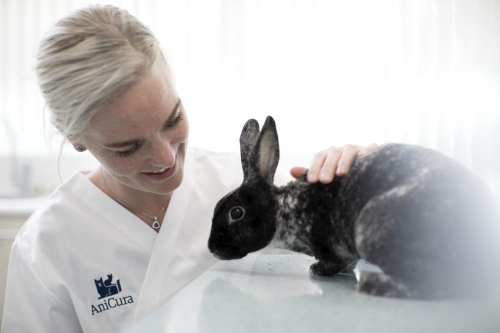 problemas-veterinarios-conejo
