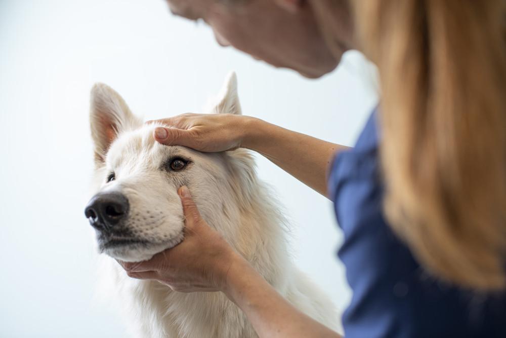 visita veterinario perros