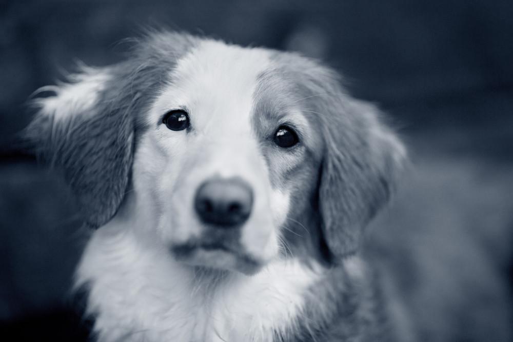 servicios veterinarios incluidos